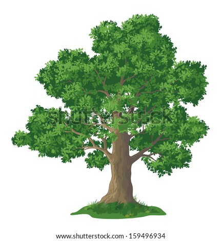 Oak tree with leaves and green grass, isolated on white background. Vector - stock vector