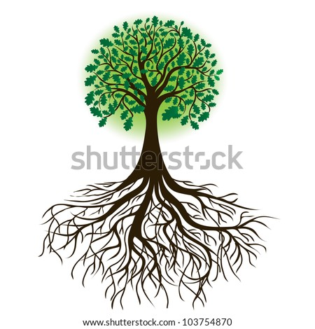oak tree with roots and dense foliage, vector image - stock vector