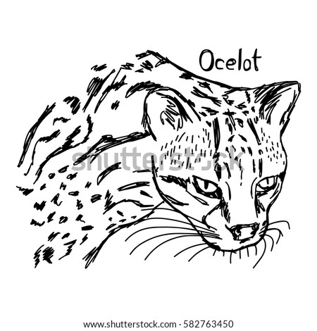 Cartoon Ocelot Stock Images Royalty Free Images Amp Vectors