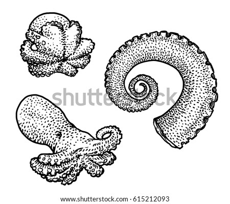 octopus and tentacle illustration drawing engraving ink line art vector