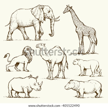 Old africana big powerful ungulate tropical jungle fauna beast isolated on white background. Freehand outline ink drawn picture sketch in art doodle style pen on paper. Side view with space for text - stock vector