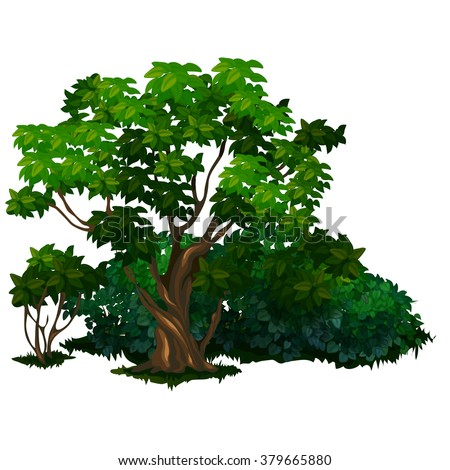 Old deciduous trees and shrubs in the Park. The vector image. - stock vector