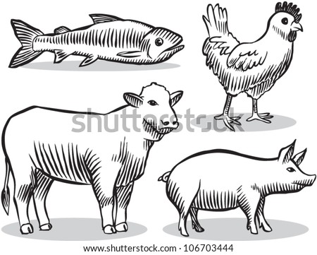 Old fashioned etched style illustration of livestock animals (cow, chicken, pig, fish). - stock vector