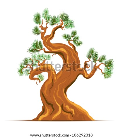 Old Pine Tree Vector Art - stock vector
