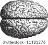 Old-time engraving of the Brain - stock photo