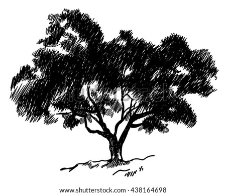 Old tree . Tree. Vector freehand drawing . Fast sketch pen .
