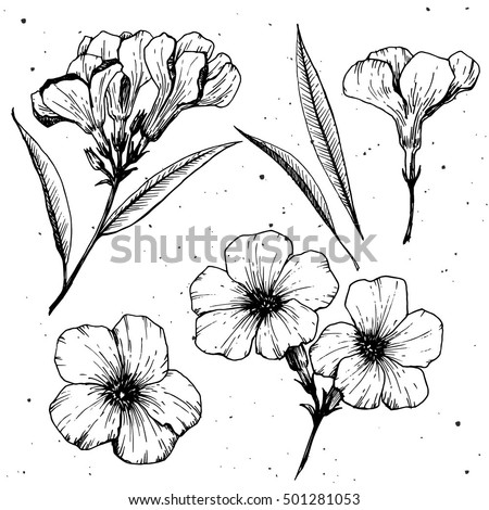 Oleander flower vector graphics engraved style stock vector royalty oleander flower vector graphics engraved style illustration sketch drawing flower and leaves oleadrn mightylinksfo
