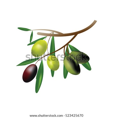 Olive branch isolated on white background,vector design.