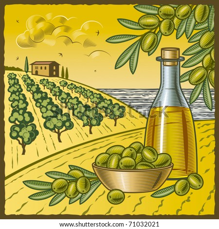 Olive harvest. Vector - stock vector