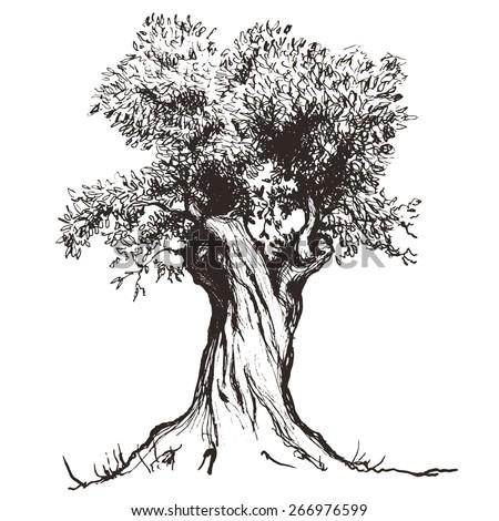 Olive Tree Stock Vector 266976599 - Shutterstock