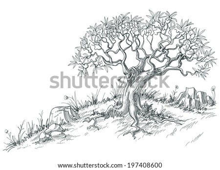 Olive tree graphic - stock vector