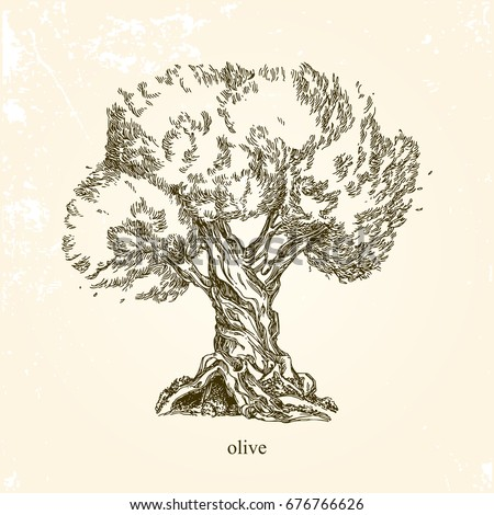 Olive Tree Vintage Style Vector Illustration Stock Vector ...