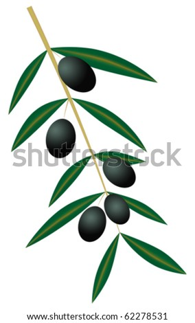 olives on branch isolated - eps 10