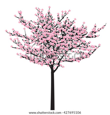 one full bloom pink sakura tree stock vector 427695106 - shutterstock