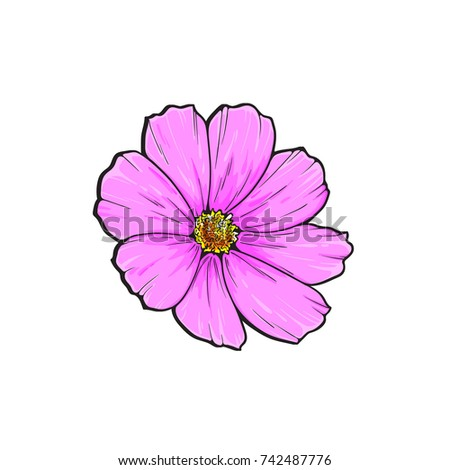 One pink flower sketch color vector stock vector 742487776 one pink flower sketch in color vector illustration isolated on white background mightylinksfo