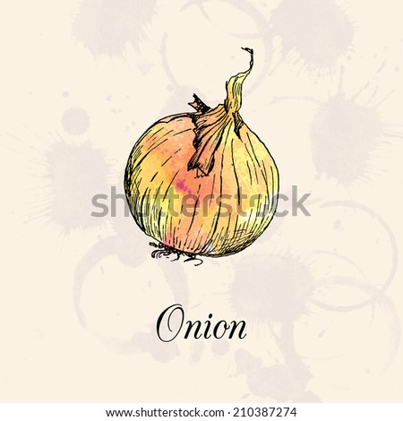 Onion, drawing by ink and watercolor at vintage background, hand drawn vegetables,   vector illustration