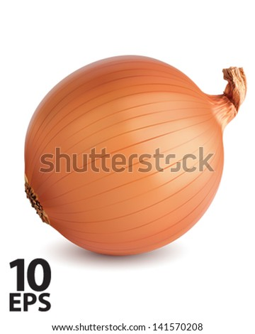 Onion isolated. Vector illustration - stock vector