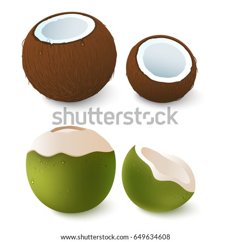 Open brown and green coconut. Exotic attribute of summer vacation. Isolated on white.Vector 3d illustration. Eps 10.