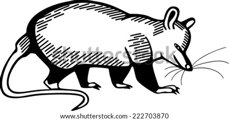 Opossum - stock vector