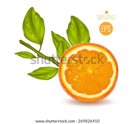 Orange cut in half. Citrus isolated on white background beautiful fresh fruit. Vector realistic art illustration for advertising packaging carton bottle banner wallpaper. Color yellow green. Colorful - stock vector