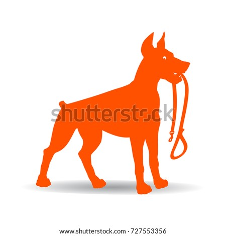orange dog silhouette doberman pinscher keeps leash on white background vector
