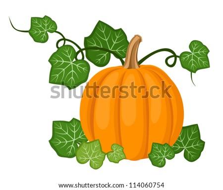 Orange pumpkin with leaves. Vector illustration. - stock vector