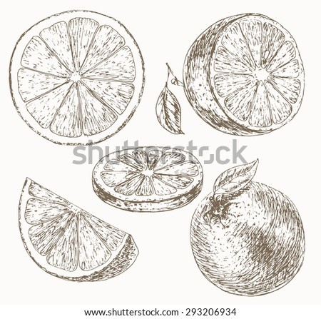 Orange set. Cut fruit. Hand drawn illustration of food sliced ingredients. Vector - stock vector