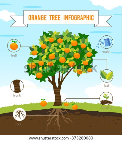 Yellow And Green Gourd Stock Picture furthermore Stock Vector Orange Tree Info Graphic Vector in addition Fruit Buffet Stock Picture as well Kiwi Fruit Slice Hi furthermore Lime Lemon And Orange Cutaway Download Royalty Free Vector File Eps. on orange fruit clip art free