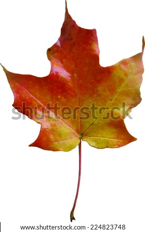 Orange Yellow Leaf - Fall Leaves - Vector Image - stock vector