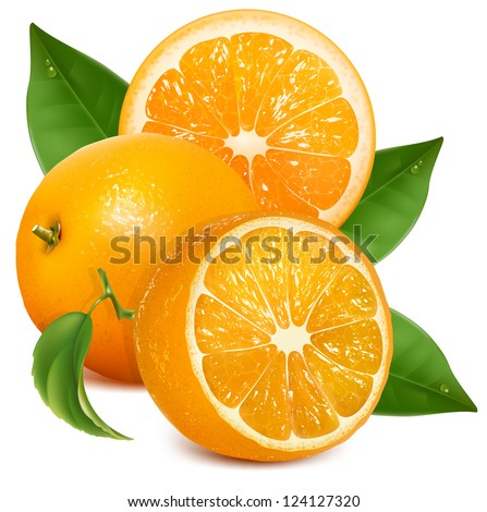 Oranges with leaves. Half cut and whole oranges. Vector illustration.