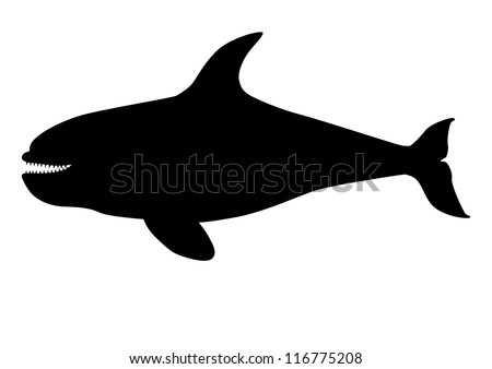 Orca ( killer whale ) silhouette - stock vector