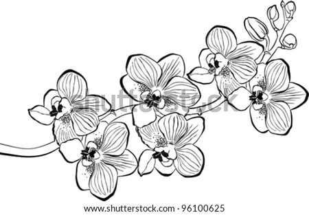 Orchid branch isolated on white background. Vector Illustration