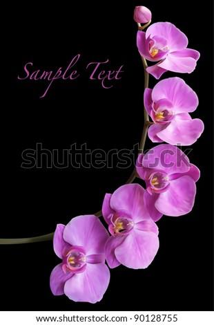 Orchid flower blossom vector - stock vector
