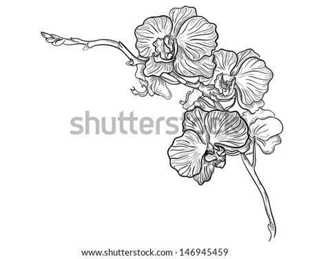 orchid flower hand drawn vector stock vector 146945459 shutterstock. Black Bedroom Furniture Sets. Home Design Ideas