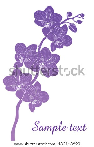 Orchid flower, isolated on White background. Vector illustration - stock vector