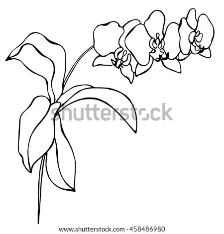 sketch orchid branch hand drawn ink stock vector 185888465
