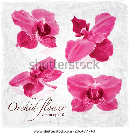 Orchid flower, vector background