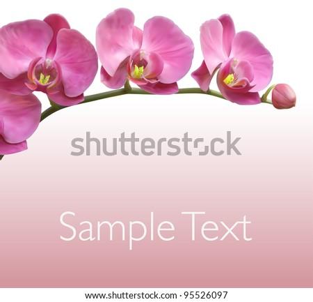 Orchid flower vector background design - stock vector