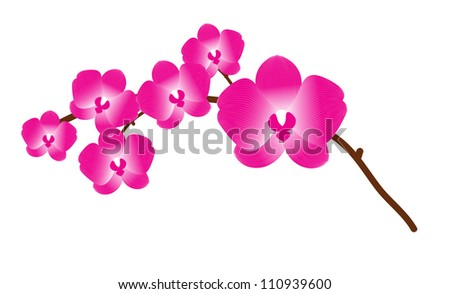 Orchid flower vector background for design - stock vector