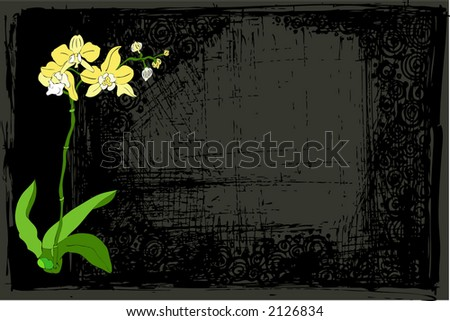 orchid flowers background - stock vector