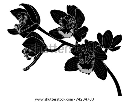 orchid silhouette - stock vector