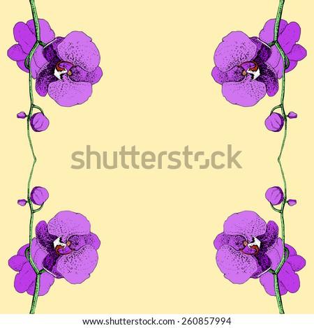 orchid, vector illustration hand-drawn - stock vector