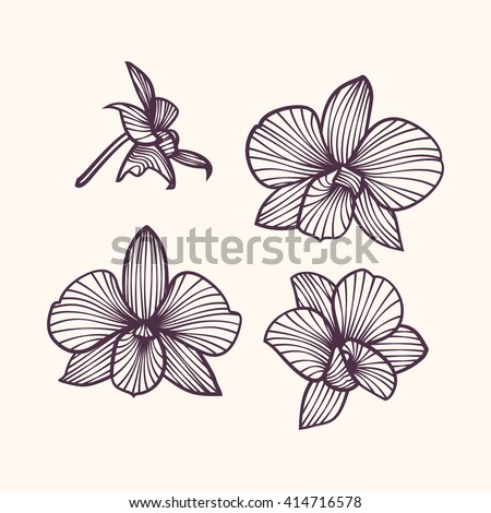 Orchids . Orchids . Orchids . Orchids . Orchids . Orchids . Orchids . Orchids . Orchids . Orchids . Orchids . Orchids . Orchids . Orchids . Orchids . Orchids . Orchids . Orchids . Orchids . Orchids - stock vector