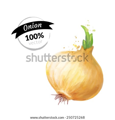 Organic onion isolated on white background. Watercolor vector illustration eps10. - stock vector