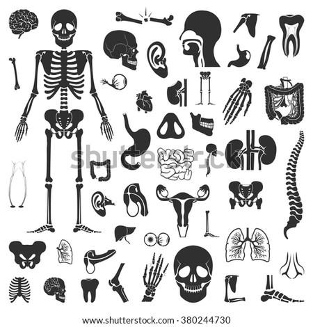 Organs Icons Set. Organs Icons Simple. Organs Set UI. Organs Set. Organs Set App. Organs Set Web. Organs Icons Art. Organs Icons Eps. Organs Icons Logo. Organs Icons Black. Organs Icons Sign. Organ. - stock vector