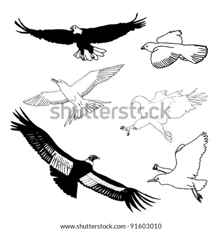 original drawing of set of black and white birds - stock vector