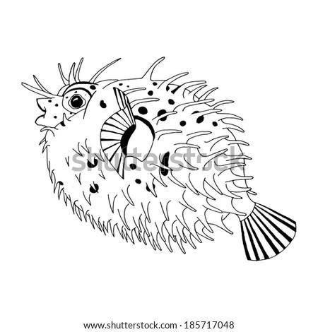 Porcupine Fish Drawing