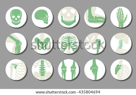 Orthopedic and spine vector icons. Human bone of illustration and anatomy skeleton bone x-ray image - stock vector