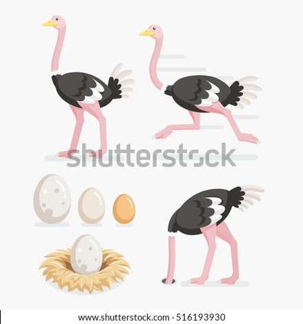 Ostrich And Eggs On The Nests Vector Illustration Flat Design