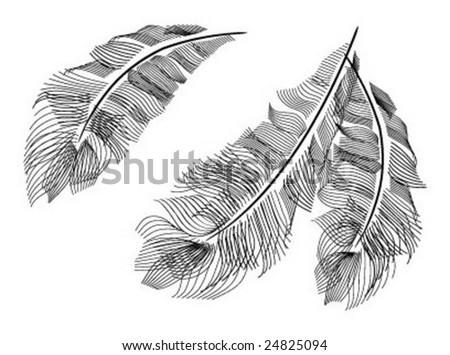 Ostrich's feathers - stock vector